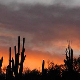 Elvira Butler - Sonoran desert sunset