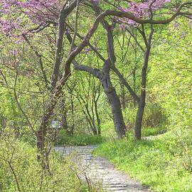 Ann Horn - Spring Canopy
