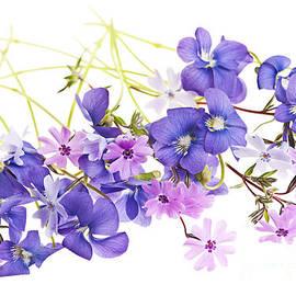 Elena Elisseeva - Spring flowers