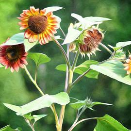 Bill Cannon - Sunflower Power