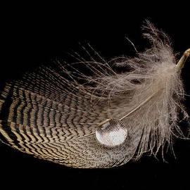 Jean Noren - Wet Feather