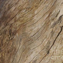 Morgan Wright - Wood