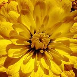 Bruce Bley - Yellow Glow