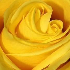 Bruce Bley - Yellow Swirl