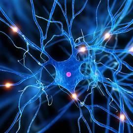 Sciepro - Nerve Cell, Artwork