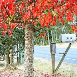 Pamela Patch - 16312 Maple Tree Lane