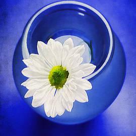 Darren Fisher - Blue