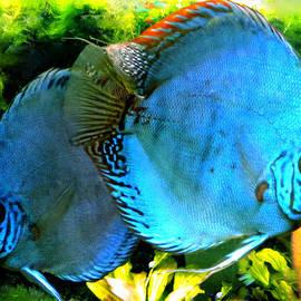 Colette V Hera  Guggenheim  - 2 Fish friends swimming in the danish water