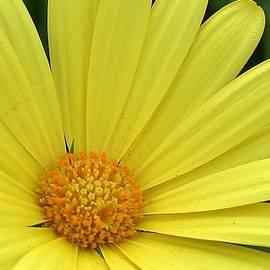 Bruce Bley - Rays of Sunshine