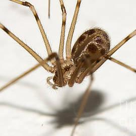 Mareko Marciniak - Spider