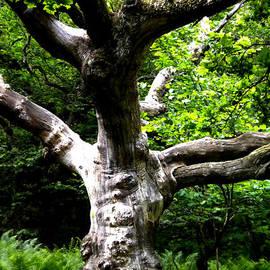 Colette V Hera  Guggenheim  - Tree in Forest Denmark