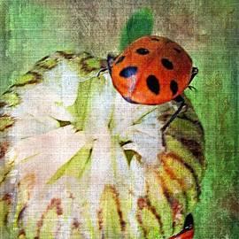 Irina Hays - Bud and Bug