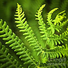 Elena Elisseeva - Fern leaf
