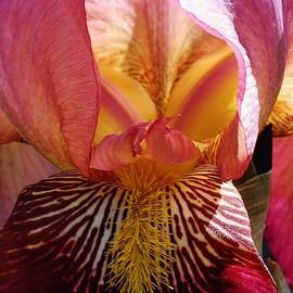 Bruce Bley - Natures Beauty