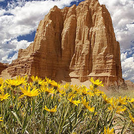 Mark Smith - Capitol Reef National Park Catherdal Valley