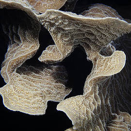 Coral design