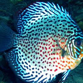 Colette V Hera  Guggenheim  - Fish
