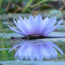 Chad and Stacey Hall - A Beautiful Water Lily Reflection
