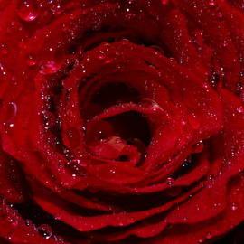 Babumon M g - A Rose
