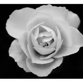 Richard Shelton - A Rose For Karen