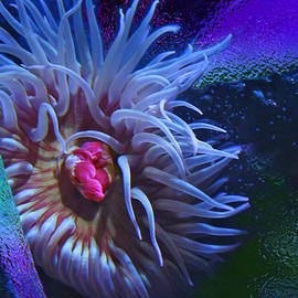 Natalya Shvetsky - A Sea Anemone
