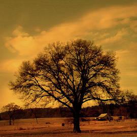 Nina Fosdick - A tree in the wind
