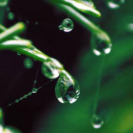 Alisa Andersen - Afternoon Rain