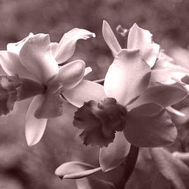 Kerri Ligatich - An Orchid Dream