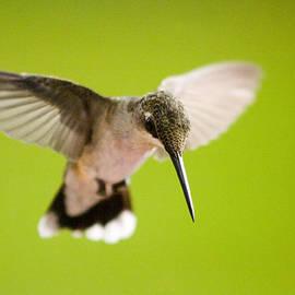 Cris Hayes - Angel in Flight - Hummingbird -- Artist Cris Hayes