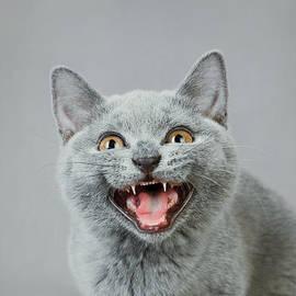 Waldek Dabrowski - Angry kitten