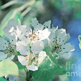 Viaina     - Apple Blossoms