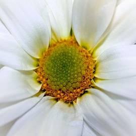 Elizabeth  Doran - Asteraceae