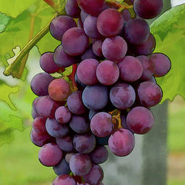 Michael Flood - August Grapes