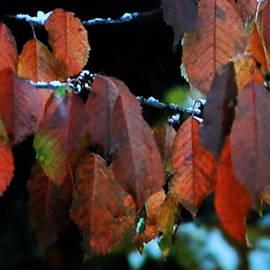 Colette V Hera  Guggenheim  - Autumn Arived
