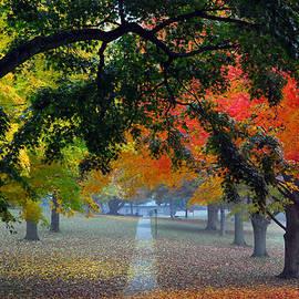 Lisa  Phillips - Autumn Canopy