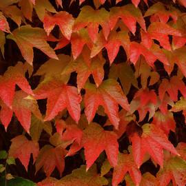 Colette V Hera  Guggenheim  - Autumn Changes