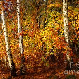Lutz Baar - Autumn Colorplay
