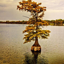Scott Pellegrin - Autumn Cypress