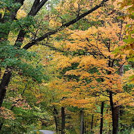 Rosanne Jordan - Autumn Drive