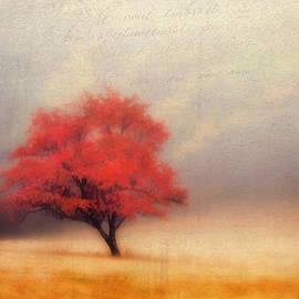 Darren Fisher - Autumn Fog