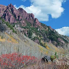 Joan Carroll - Autumn in the Aspen Hills