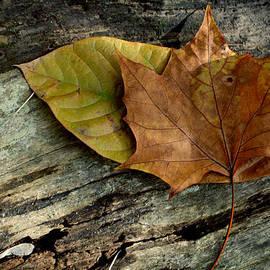 Lisa Hartsell - Autumn