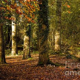 Jay Lethbridge - Autumn Morning Sunshine