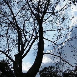 Prashant Ambastha - Autumn