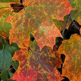 Doris Potter - Autumn Splendor