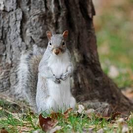 Diane Giurco - Autumn Squirrel