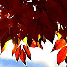 Danielle  Parent - Autumn Sun Glory