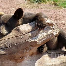 Barbara Henry - BABY BEAR