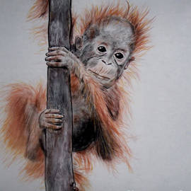 Jim Fitzpatrick - Baby Orangutan