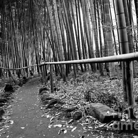 Dean Harte - Bamboo Path
